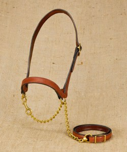 Flat 1 Buckle Show Halter for Dairy Cattle