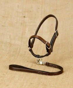 Leather show halter for sheep and lead